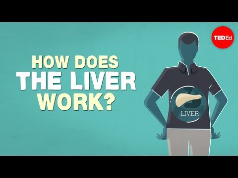 What does the liver do?